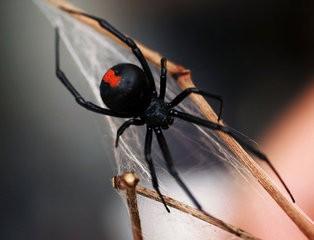 AMIR spiderockillegendevil spider